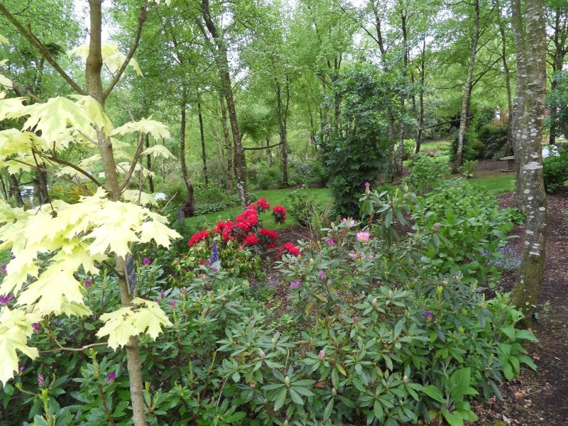 le jardin de danyland Sdc18912