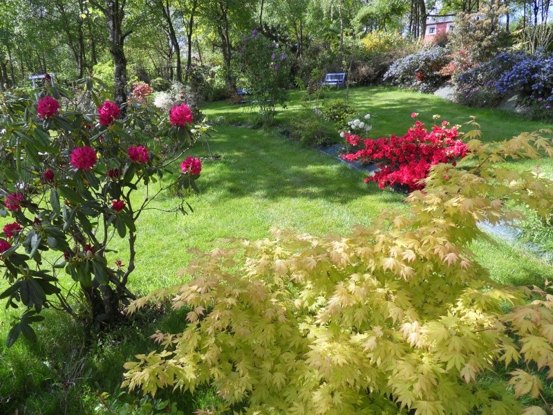 le jardin de danyland Sdc19026