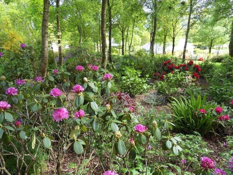 le jardin de danyland Sdc19112