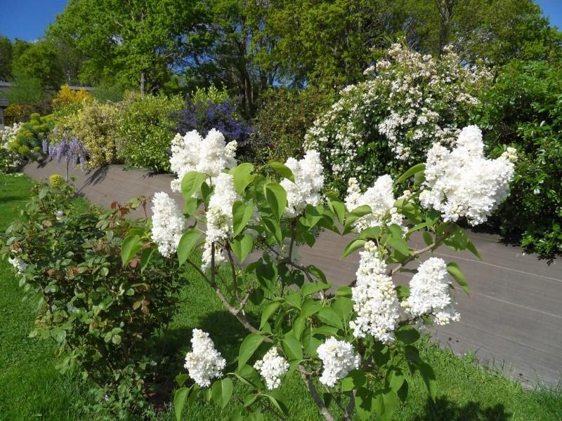 le jardin de danyland Sdc19116
