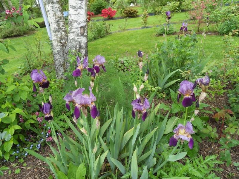 le jardin de danyland Sdc19224