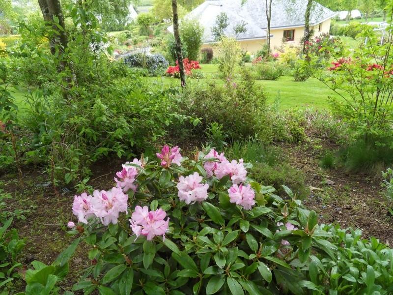 le jardin de danyland Sdc19228