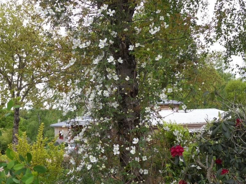 le jardin de danyland Sdc19313