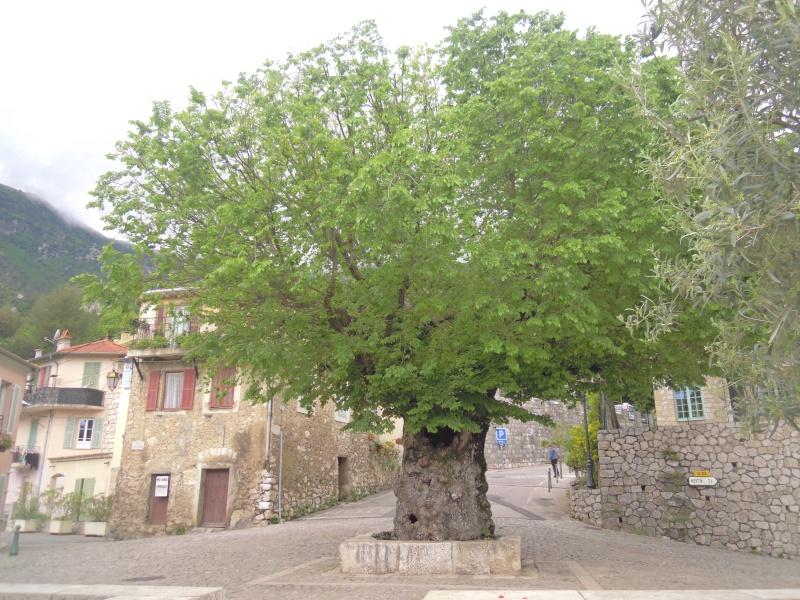 des Citrons au Baudon Dscn6612