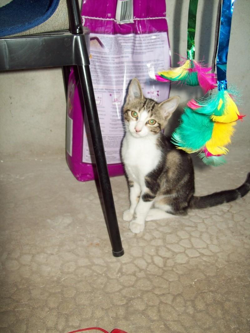 Minimid petit chaton male 2mois 1/2 100_0414