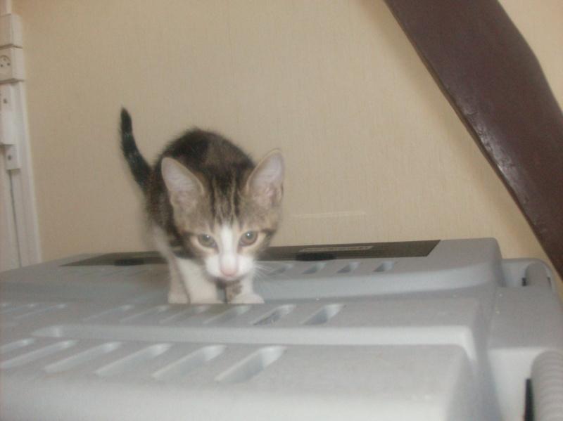 Minimid petit chaton male 2mois 1/2 Hpim2220