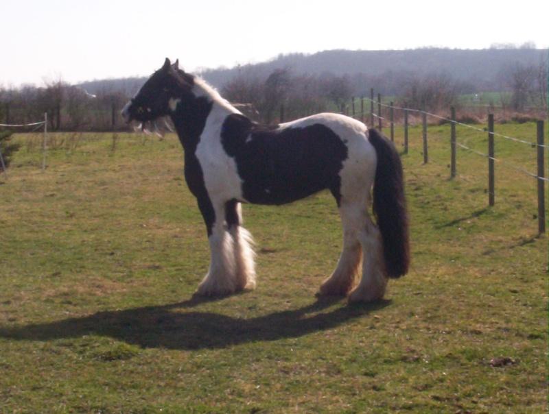 carnaval à cheval 100_1110