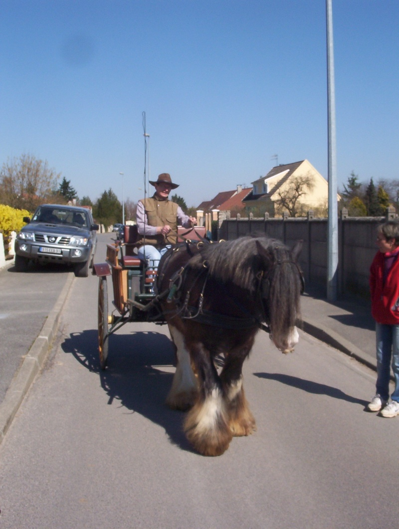 carnaval à cheval 310