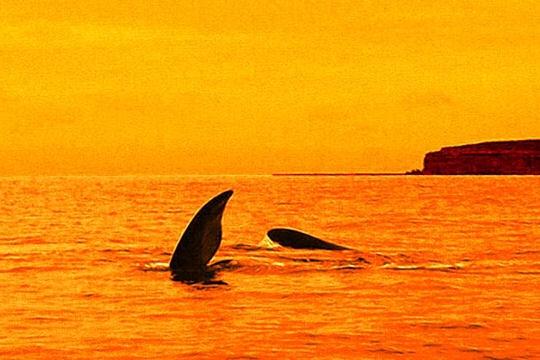 Les 100 plus belles photos animalières de l'année Balein10