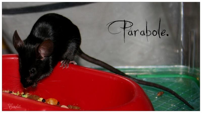 Parabole. Parabo10