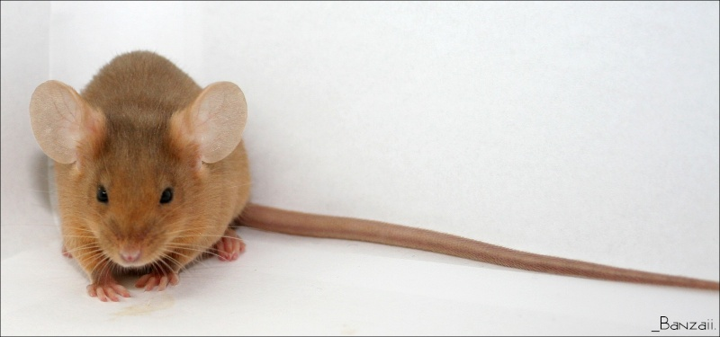 Pumpkin, une souris aux couleurs d'Halloween ! Pix_cy31