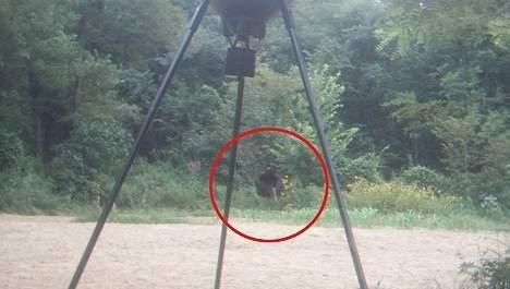 Un bigfoot dans leur jardin? Media_77