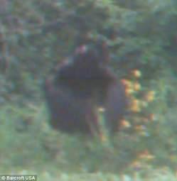 Un bigfoot dans leur jardin? Media_78