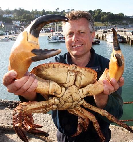 Crabe géant des cocotiers, assez impressionnant. - Page 2 Untitl20