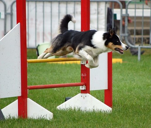 Concours photo Agility 2009: Vote final 03_avr10