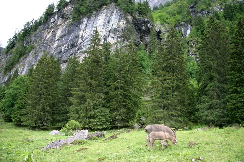 La section Vosges-Alsace-Lorraine de la SAJA - Page 4 Img_8411