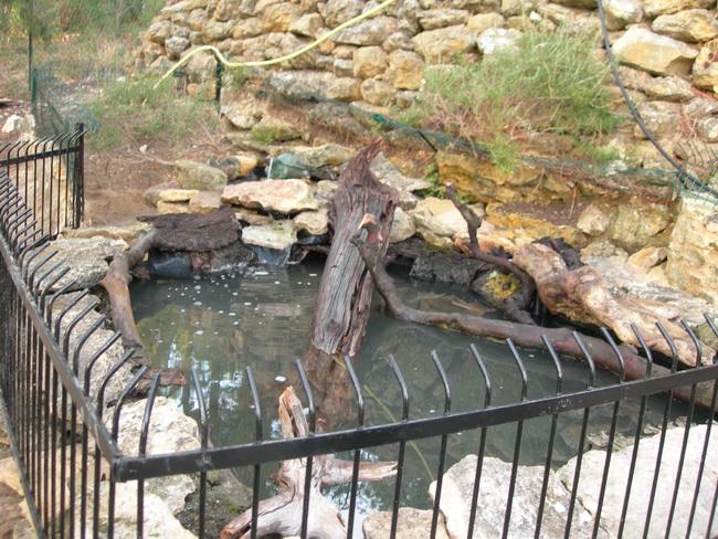 notre bassin pour tortues... Le_bas10