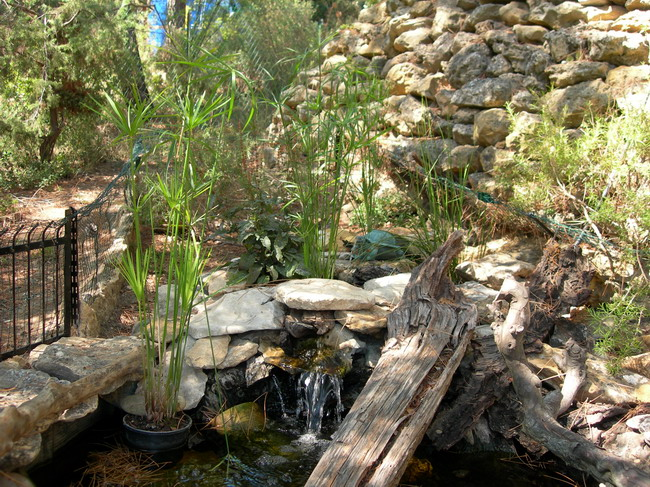 notre bassin pour tortues... - Page 2 Le_bas15