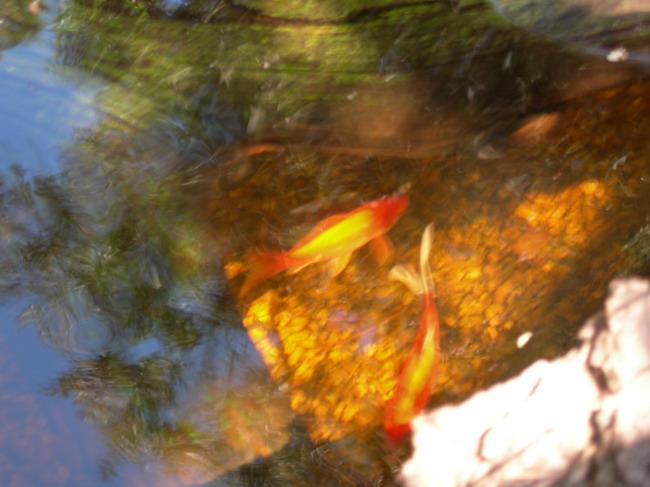 notre bassin pour tortues... - Page 2 Les_po10