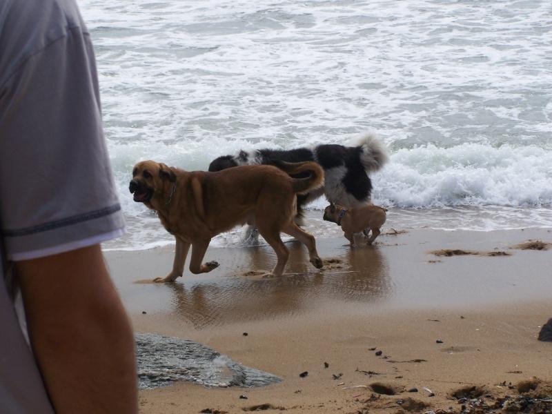 Vacances à la mer, Septembre 2009 100_6112