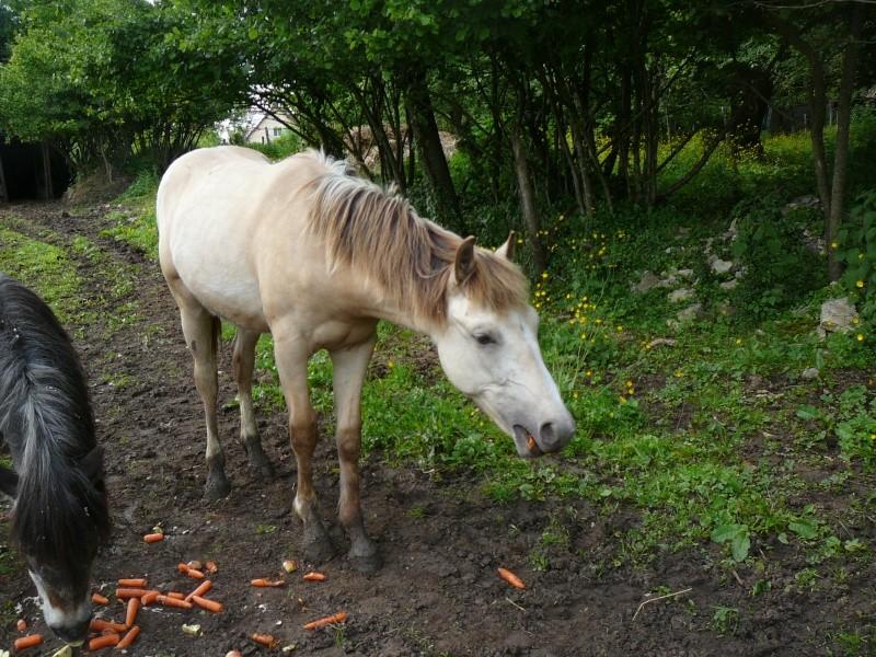 CHADOW - ONC Poney né en 2012 - adopté en septembre 2013 par Charlotte P1010632