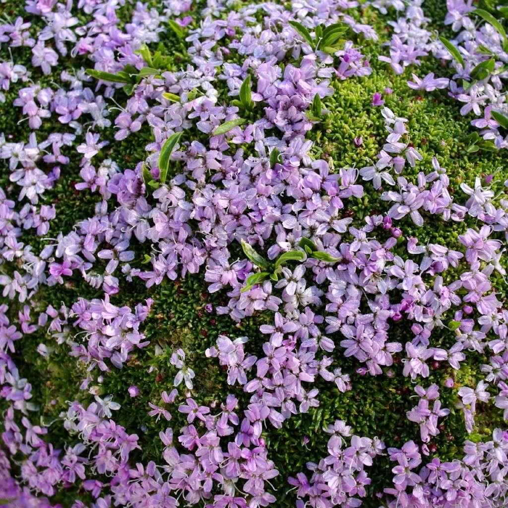 Parlons Botanique Fleurs10