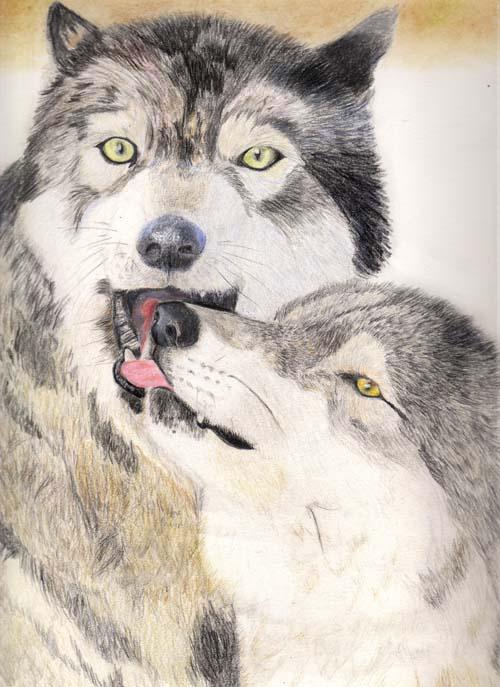 bisou de loup Loupsr11