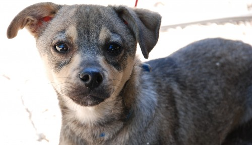 Murdock, cachorro macho de 3 meses, tamaño pequeño y muy simpaticón, en adopción-Valencia 26590510
