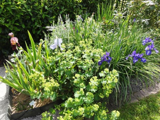 (22, 29, 35, 56) Bienvenue dans mon jardin - visite de jardins privés Dsc01843