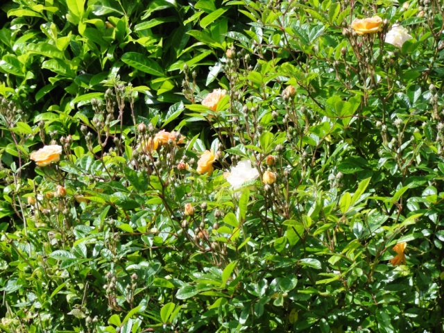 (22, 29, 35, 56) Bienvenue dans mon jardin - visite de jardins privés Dsc01847