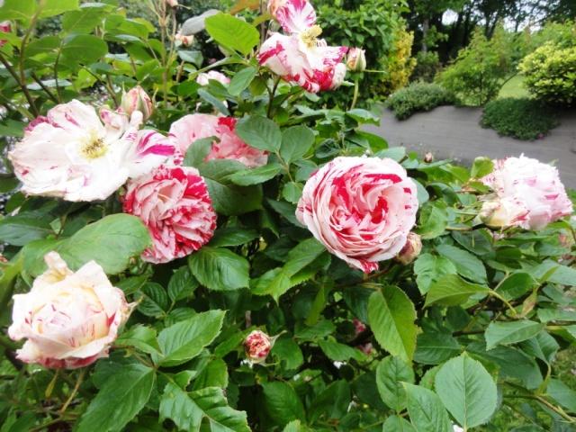 (22, 29, 35, 56) Bienvenue dans mon jardin - visite de jardins privés Dsc01851