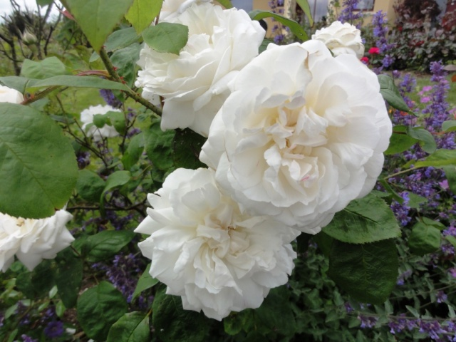(22, 29, 35, 56) Bienvenue dans mon jardin - visite de jardins privés Dsc01853