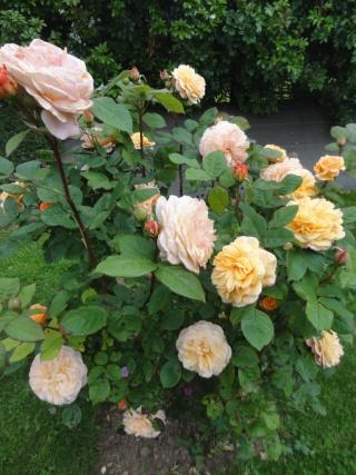 (22, 29, 35, 56) Bienvenue dans mon jardin - visite de jardins privés Dsc01854