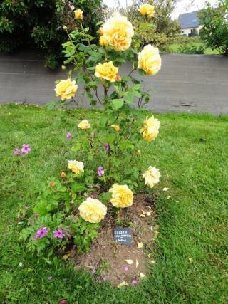 (22, 29, 35, 56) Bienvenue dans mon jardin - visite de jardins privés Dsc01855