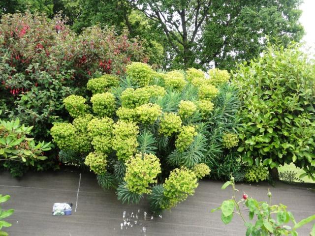 (22, 29, 35, 56) Bienvenue dans mon jardin - visite de jardins privés Dsc01856