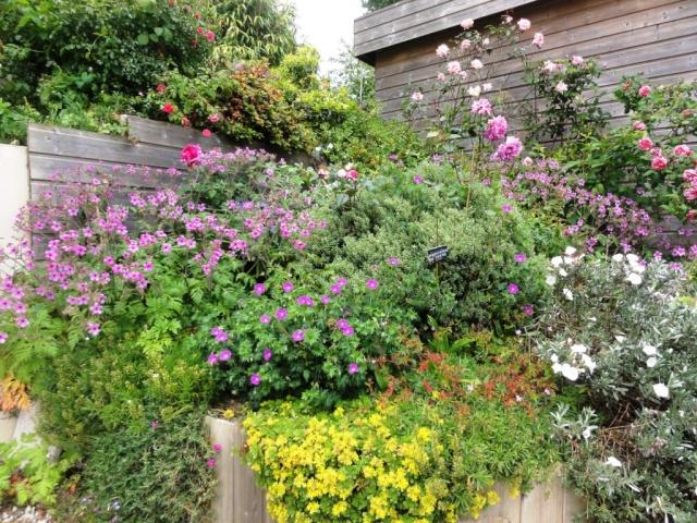 (22, 29, 35, 56) Bienvenue dans mon jardin - visite de jardins privés Dsc01858