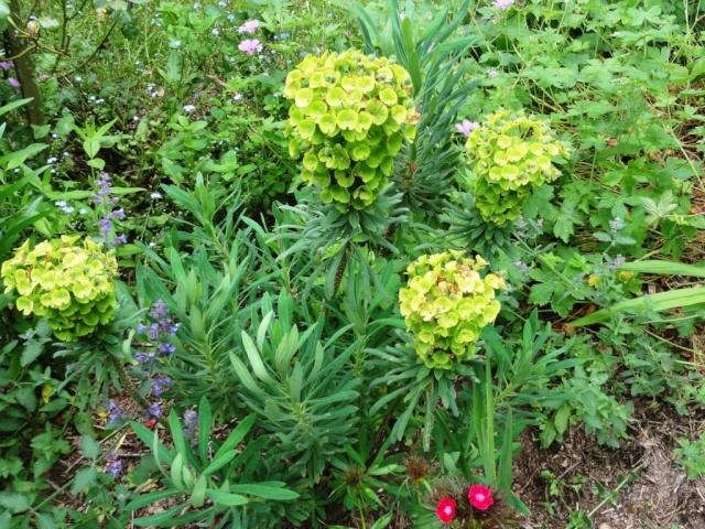 (22, 29, 35, 56) Bienvenue dans mon jardin - visite de jardins privés Dsc01910