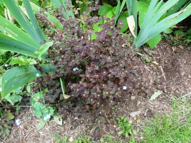 (22, 29, 35, 56) Bienvenue dans mon jardin - visite de jardins privés Dsc01911