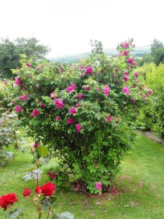 (22, 29, 35, 56) Bienvenue dans mon jardin - visite de jardins privés Dsc01913