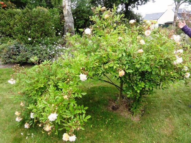 (22, 29, 35, 56) Bienvenue dans mon jardin - visite de jardins privés Dsc01918