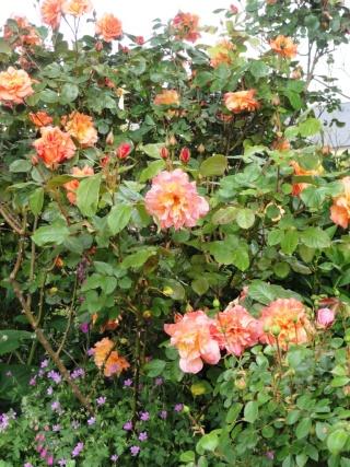 (22, 29, 35, 56) Bienvenue dans mon jardin - visite de jardins privés Dsc01919