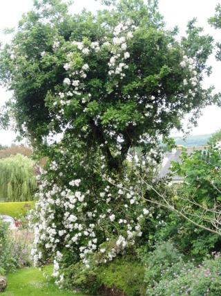 (22, 29, 35, 56) Bienvenue dans mon jardin - visite de jardins privés Dsc01921