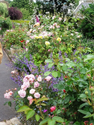 (22, 29, 35, 56) Bienvenue dans mon jardin - visite de jardins privés Dsc01922