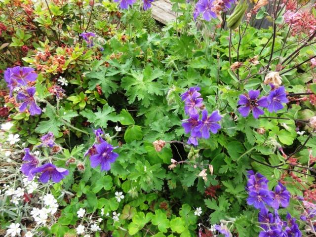(22, 29, 35, 56) Bienvenue dans mon jardin - visite de jardins privés Dsc01923