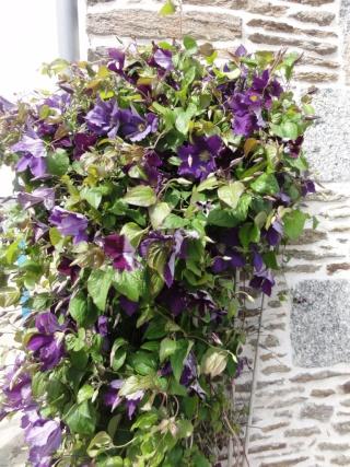 (22, 29, 35, 56) Bienvenue dans mon jardin - visite de jardins privés Dsc01925