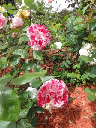 (22, 29, 35, 56) Bienvenue dans mon jardin - visite de jardins privés Dsc01928