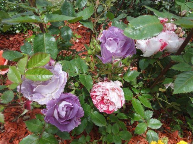 (22, 29, 35, 56) Bienvenue dans mon jardin - visite de jardins privés Dsc01929