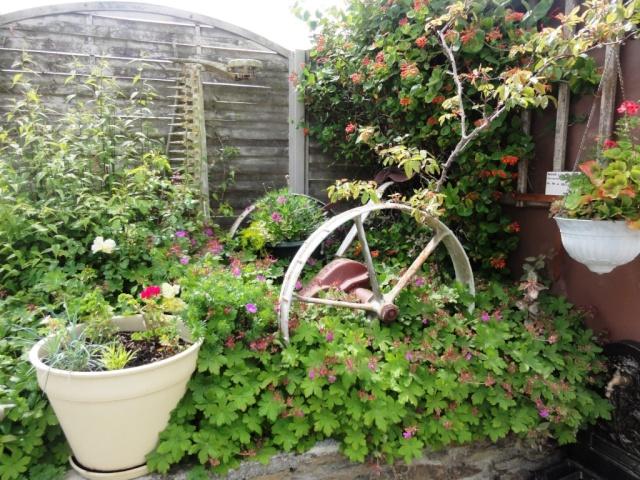 (22, 29, 35, 56) Bienvenue dans mon jardin - visite de jardins privés Dsc01930