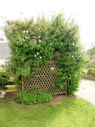 (22, 29, 35, 56) Bienvenue dans mon jardin - visite de jardins privés Dsc01931