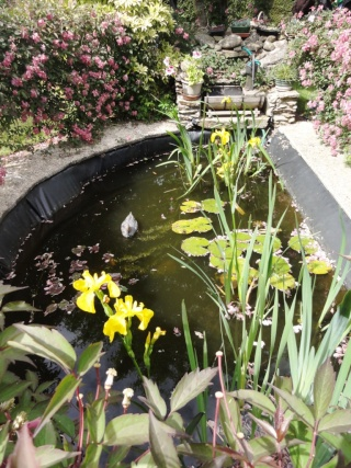 (22, 29, 35, 56) Bienvenue dans mon jardin - visite de jardins privés Dsc01934